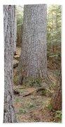 Giant White Pines - White Mountains New Hampshire Bath Towel
