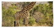 Giraffe Grazing Bath Towel