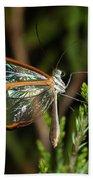 Glasswinged Butterfly Bath Towel