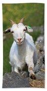 Goat Posing Bath Towel