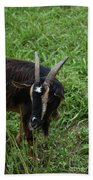 Goat With Long Horns In A Grass Field Hand Towel