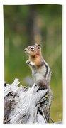 Golden Mantled Ground Squirrel Bath Towel