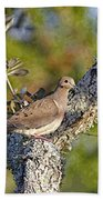 Good Mourning Dove By H H Photography Of Florida Bath Towel