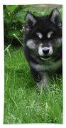 Gorgeous Alusky Puppy Dog Creeping Through Grass Bath Towel