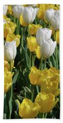 Gorgeous Blooming Field Of White And Yellow Tulips Bath Towel