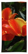 Gorgeous Flowering Orange And Red Blooming Tulips Bath Towel