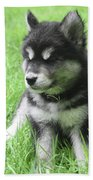 Gorgeous Fluffy Black And White Husky Puppy In Grass Hand Towel