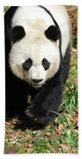 Gorgeous Sweet Giant Panda Bear Ambling Along Bath Towel