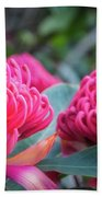 Gorgeous Waratah -floral Emblem Of New South Wales Hand Towel