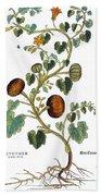 Gourd, 1735 Bath Towel
