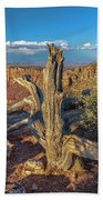 Grand Canyon Old Tree Bath Towel