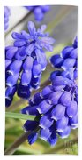 Grape Hyacinth Closeup Bath Towel