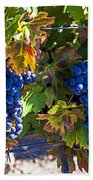 Grapes Ready For Harvest Hand Towel by Garry Gay