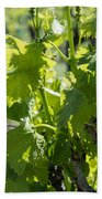 Grapevine In Early Spring Bath Towel
