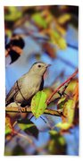 Gray Catbird Framed By Fall Bath Towel