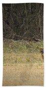 Gray Fox In Lower Pasture Bath Towel