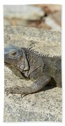 Gray Iguana Sunning And Resting On A Large Rock Bath Towel