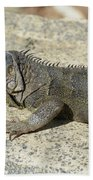 Gray Iguana With Long Talons Sitting On A Rock Bath Towel