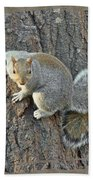 Gray Squirrel - Sciurus Carolinensis Bath Towel
