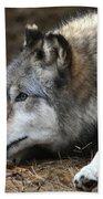 Gray Wolf Hand Towel