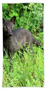 Gray Wolf Pup Hand Towel