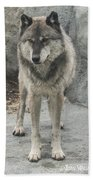 Gray Wolf Stare Bath Towel