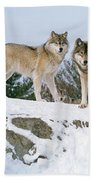 Gray Wolves Canis Lupus In A Forest Bath Towel