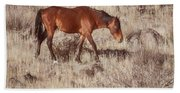 Grazing In The Winter Grass Hand Towel