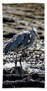 Great Blue Heron In Galapagos Bath Towel