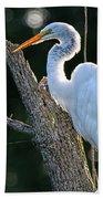 Great Egret At Rest Bath Towel