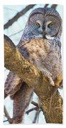 Great Gray Owl Hand Towel
