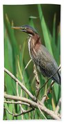 Green Heron At The Governor's Palace Gardens Hand Towel
