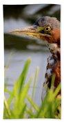 Green Heron Closeup  Bath Towel