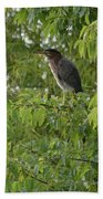 Green Heron In Tree Bath Towel
