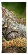 Green Iguana Costa Rica Bath Towel
