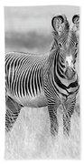 Grevy Zebra  5953bw Bath Towel
