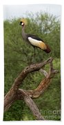 Grey Crowned Crane Hand Towel