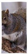 Grey Squirrel Bath Towel