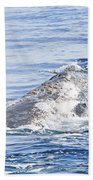 Grey Whale 2 Bath Towel