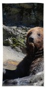 Grizzlies Snacking On Things They Find In A River Bath Towel