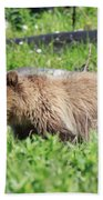 Grizzly Bear Cub In Yellowstone National Park Hand Towel