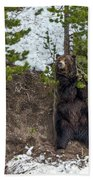 Grizzly Shaking A Tree Bath Towel