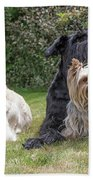 Group Of Three Dogs Bath Towel