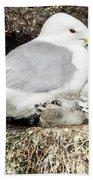 Gull Adult And Chick On Cliff Bath Towel