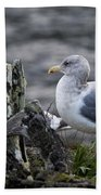 Gulls Bath Towel