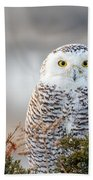 Hampton Beach Nh Snowy Owl Bath Towel