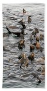 Happy Sea Lions In Santa Cruz Bath Towel