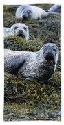 Harbor Seal Colony At Loch Dunvegan Bath Towel