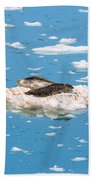 Harbor Seals On Clouds Of Ice Bath Towel