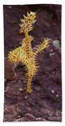 Harlequin Ghost Pipefish - Solenostomus Paradoxus Bath Towel